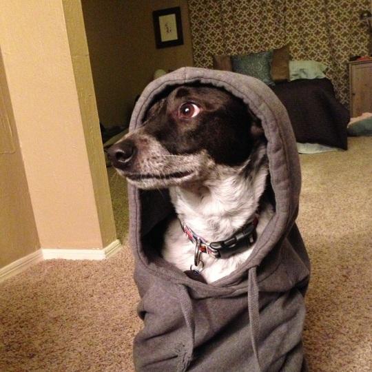 A cute dog wearing a sweatshirt